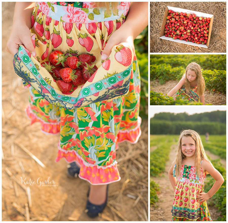 strawberry picking photo session
