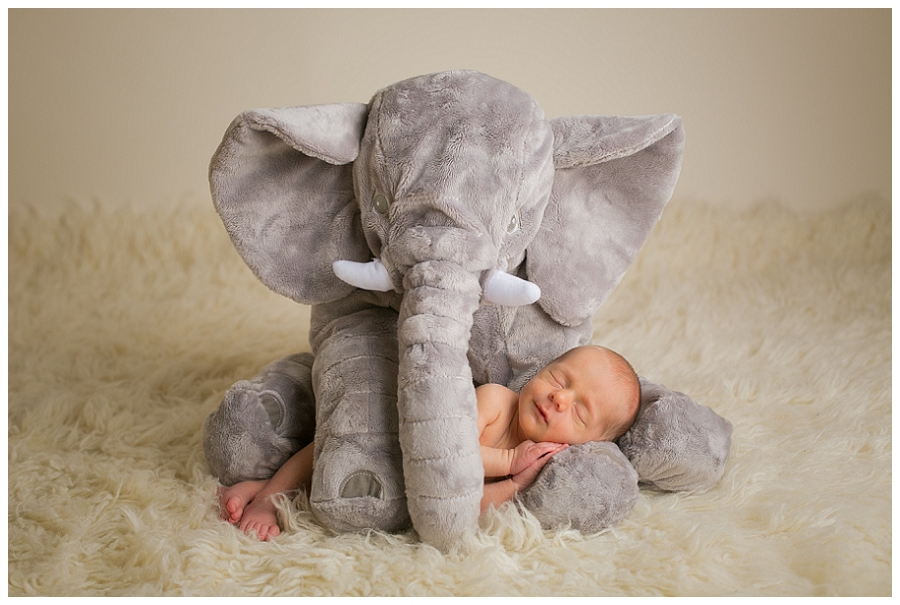 Katie Garber Photography – Williamsport Montoursville PA newborn photographer – baby and elephant portrait - Grant 11-18